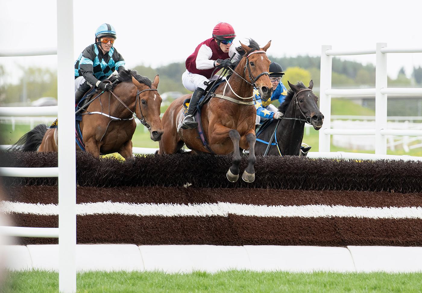 Mutadaffeq och Niklas Lovén hoppar sista hindret innan målgång. Bro Park 210519 Foto: Elina Björklund / Svensk Galopp